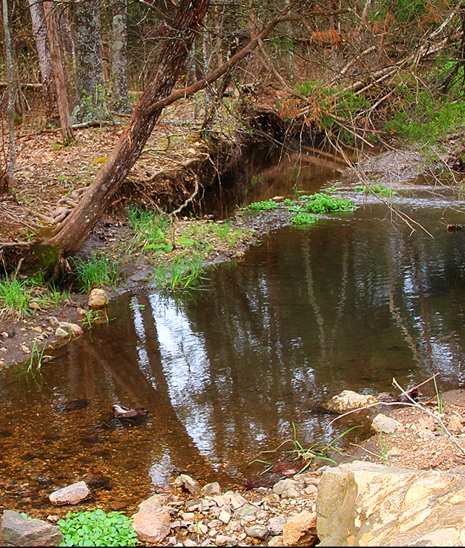 Ebbing Spring-Old Success water source.